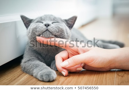 jeunes · chat · main · humaine · domestique · chat · gris · blanche - photo stock © joannawnuk