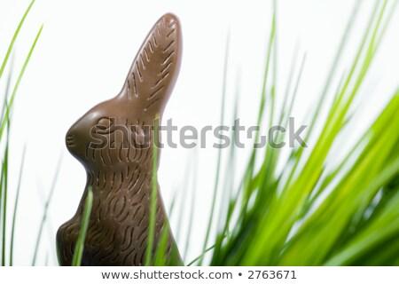 скрытый шоколадом кролик свежие гвоздика области Сток-фото © smithore