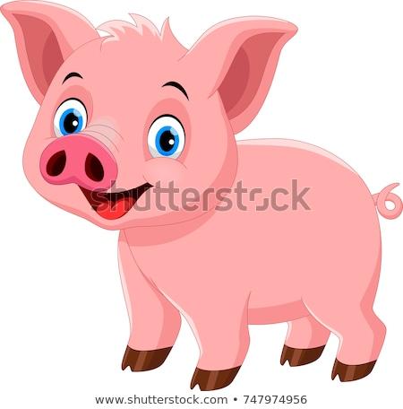 свинья Cartoon весело животного Cute иллюстрация Сток-фото © dagadu