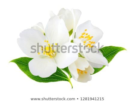witte · bloemen · natuur · blad · tuin · zomer · groene - stockfoto © Masha