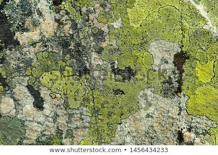 lichen on rough stone surface Stock photo © prill