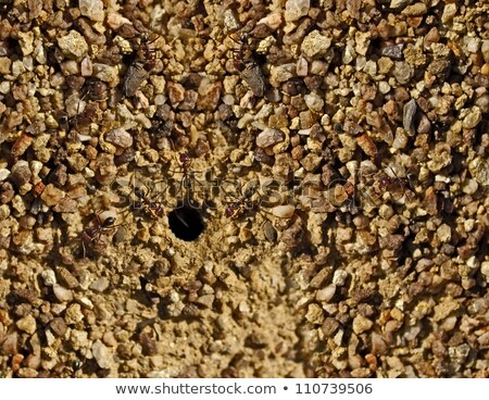 avustralya · boğa · karıncalar · yuva · granit · doku - stok fotoğraf © byjenjen