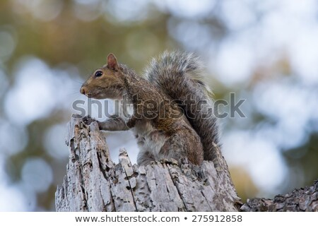 defiant tree stump Stock photo © tdoes
