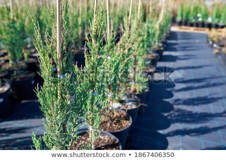 árbol joven Cartoon rocas hoja planta Foto stock © blamb