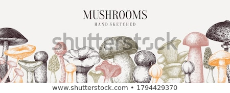 Comestível cogumelo branco vegetal fresco dieta Foto stock © M-studio