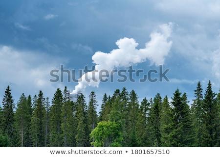 インテリジェンス · 成長 · 緑の木 · 人間 - ストックフォト © lightsource