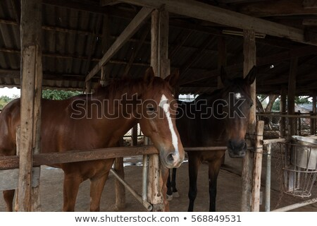 Details white horse in the stable box Stock photo © vladacanon