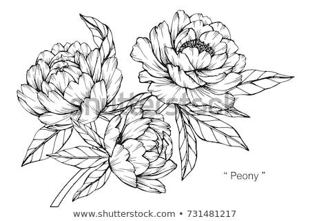 vektör · logo · süs · bitkiler · bahçe · çiçek - stok fotoğraf © move_on