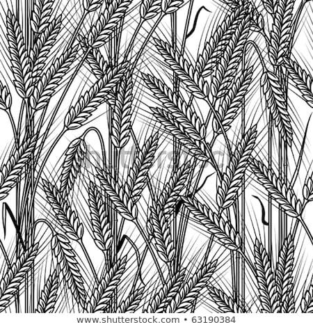 ушки пшеницы ячмень рожь бесшовный зерновых Сток-фото © Hermione