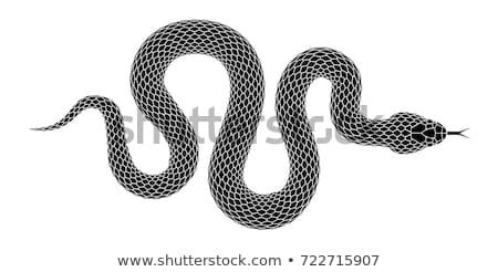 snake tattoo stock photo © sahua