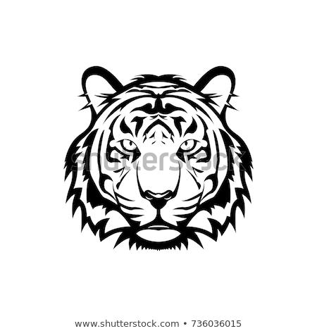 tête · tigre · illustration · grand · forte · canine - photo stock © fmuqodas
