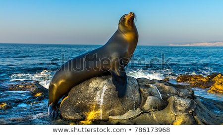 Stock photo: Sea Lions Fight In The Waves Of The Ocean