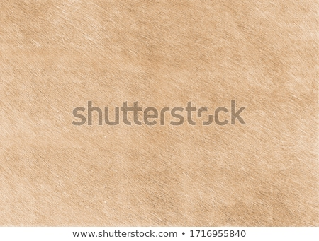 pony beige fur Stock photo © taviphoto