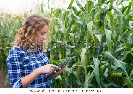 Harvesting Female Farmer In a Cornfield Stock photo © Voysla