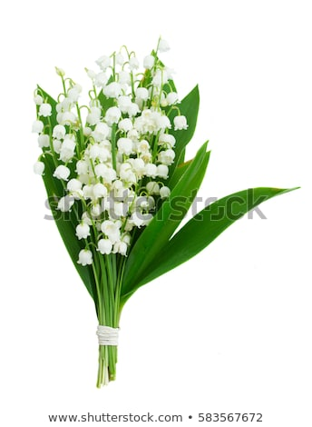 Lilly of valley in green leaves  Stock photo © jonnysek