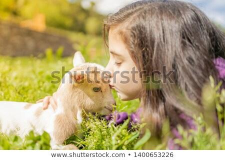 Little girl and goat stock photo © nizhava1956