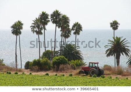 Traktör çilek alanları alan okyanus gökyüzü Stok fotoğraf © aspenrock