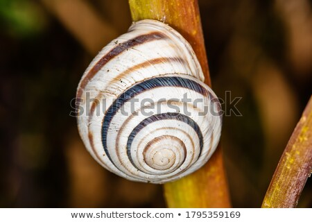 waiting snail stock photo © derocz