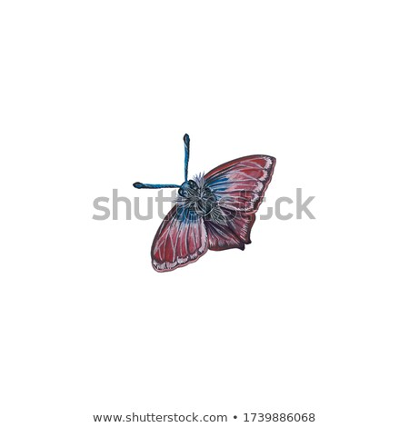 big fluffy butterfly, moth closeup on white background Stock photo © kirpad