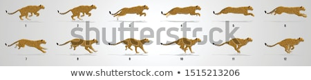 Cheetah sequence Stock photo © markbeckwith