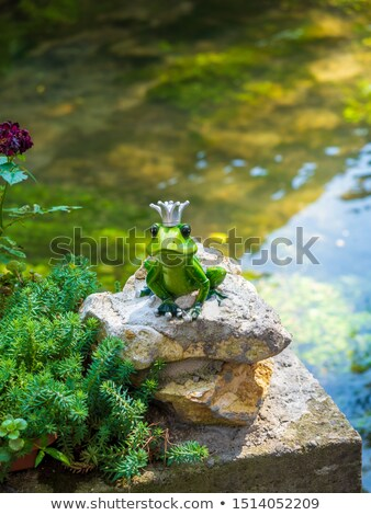 Frog with crown on the leaf stock photo © ulyankin