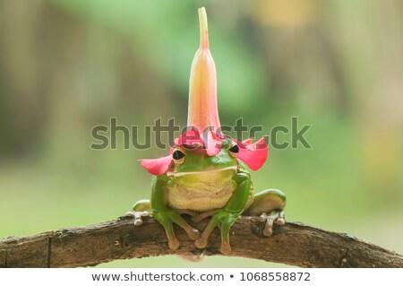 счастливым · лягушка · иллюстрация · веселый · зеленый · красный - Сток-фото © derocz