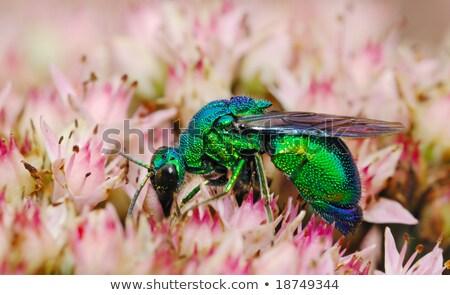 Yeşil madeni arı çiçek polen Stok fotoğraf © brm1949