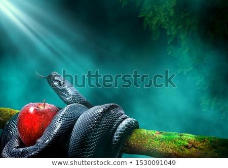 jardín · ilustración · amor · hombre · manzana · Pareja - foto stock © adrenalina