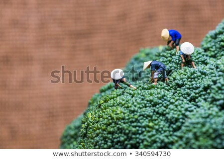 Miniatűr ázsiai aratás brokkoli szín makró Stock fotó © Kirill_M