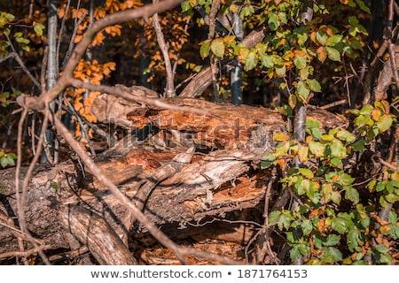 quente · pôr · do · sol · luz · solar · outono · floresta · luz - foto stock © juhku