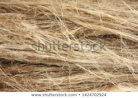 Dry Flax Fiber Stock photo © rghenry
