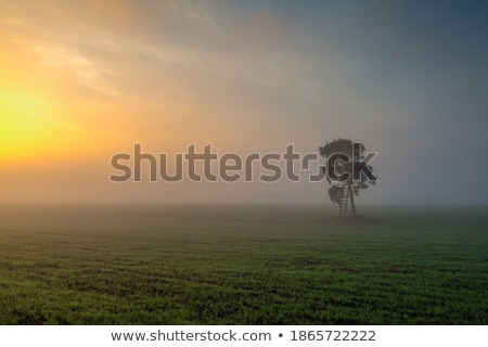 solitario · árbol · manana · niebla · vacío · campo - foto stock © CaptureLight