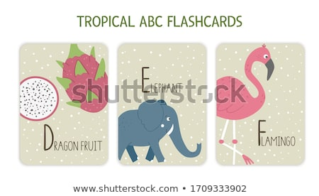 Flashcard letter F is for fruit Stock photo © bluering
