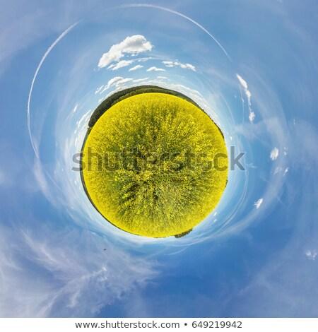Pequeño planeta verano rural violación campo Foto stock © artush