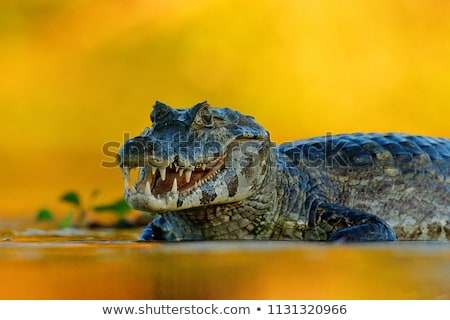 A reptile at the river Stock photo © bluering