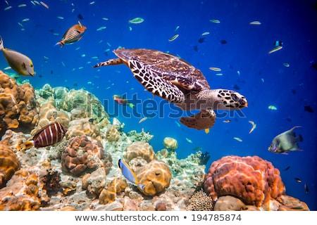 Szépség tenger élet iskola hal háttér Stock fotó © jawa123