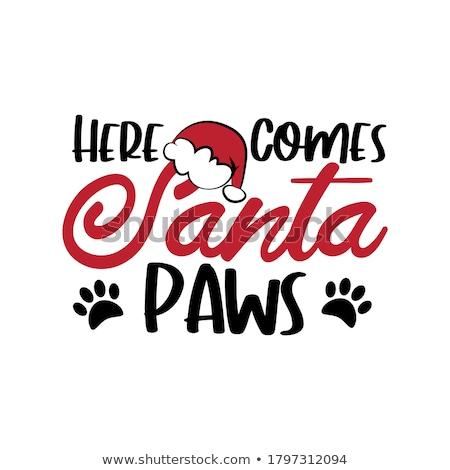 Mały psa szczeniak kolorowy christmas Zdjęcia stock © marimorena