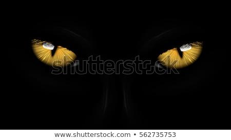 Groene ogen zwarte panter donkere gezicht ontwerp Stockfoto © Panaceadoll