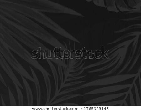 Colorido flor isolado abstrato escuro água Foto stock © cosveta