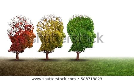 cerebro · árbol · ilustración · intelectual · crecimiento · de · trabajo - foto stock © lightsource