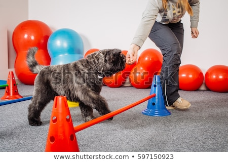 Trainer assisting a girl in obstacle course training Stock photo © wavebreak_media