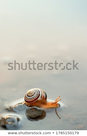 snail crawling on the meadow Stock photo © Olena