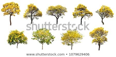 Sarı ağaç dal sonbahar doğal renk Stok fotoğraf © wildman
