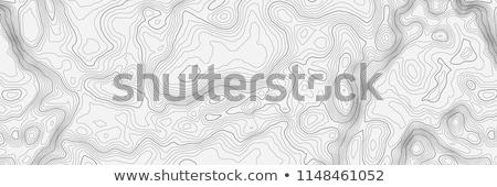 Topographic contour in vector Stock photo © studioworkstock