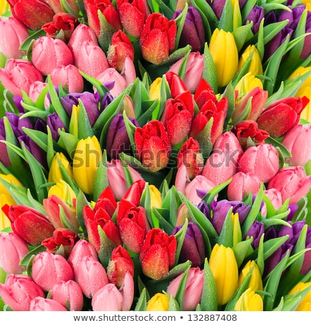Easter holiday composition in yellow colors with spring flowers Stock photo © artsvitlyna
