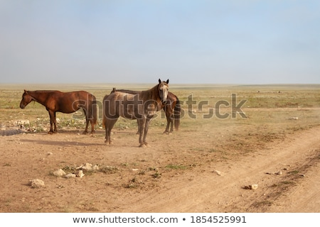 Group of horses standing in road Stock photo © IS2