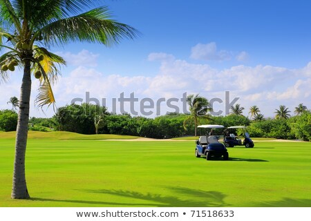 golf course tropical palm trees in Mexico Stock photo © lunamarina