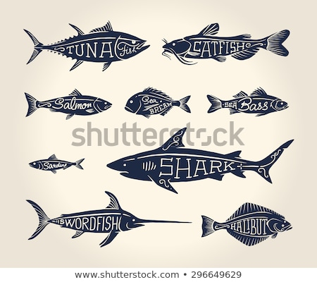 bass and bream seafood set vector vintage icons stock photo © robuart