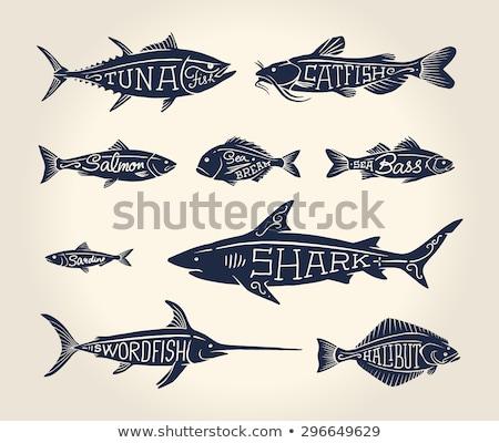 Basse fruits de mer vecteur vintage icônes Photo stock © robuart