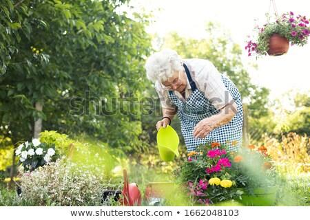 senior woman planting flowers at summer garden Stock photo © dolgachov
